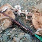 ۷ شکارچی متخلف پس از ۷۲ ساعت تعقیب و گریز در سفیدکوه خرمآباد دستگیر شدند