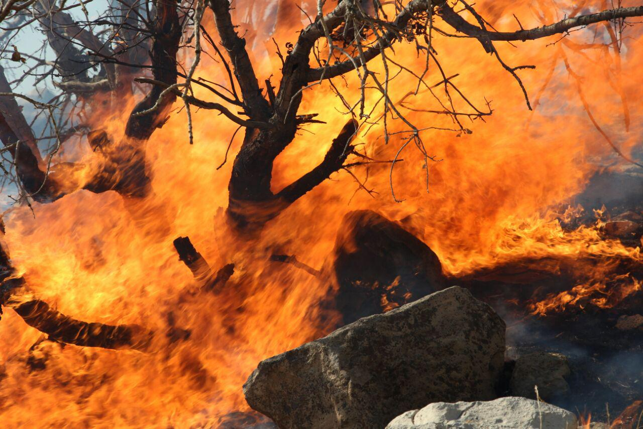 هفت هزار نیروی ارتش و سپاه برای اطفای حریق جنگل های لرستان آماده اند