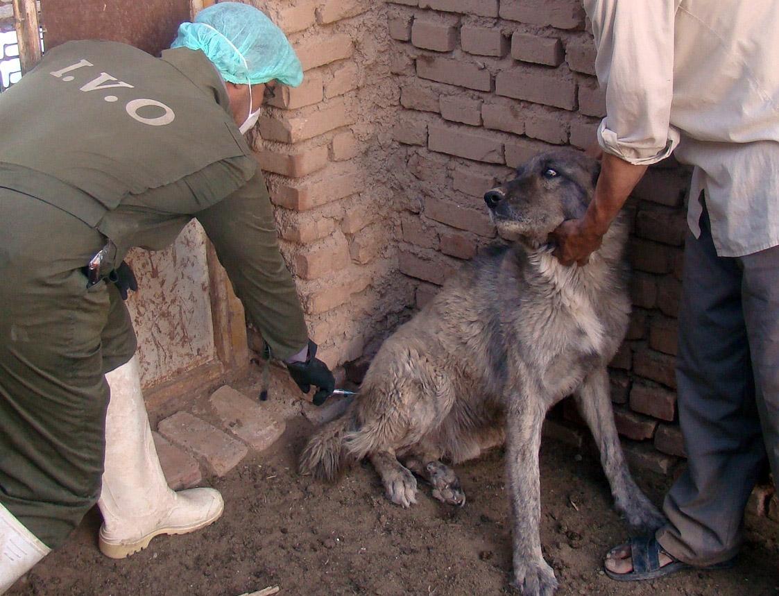 شیوع بیماری هاری در یکی از روستاهای شهرستان دورود/ اقدامات مراقبتی تشدید می شود